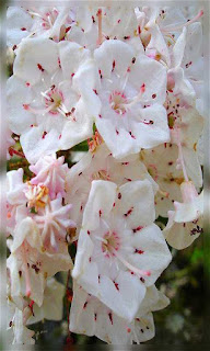 Flores tiernas blancas con rojo fondos wallpaper para teléfono móvil resolución 480x800