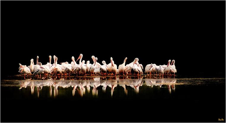 "Emerging Photographers, Best Photo of the Day in Emphoka by Stuart ""Stu-Bo"" Baxter"