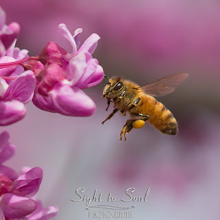 flying honey bee wall art print