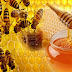 List of Benefits of Honey for the Body
