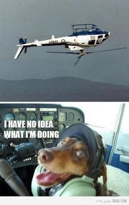 Ich habe keine Idee was ich da mache - Hund im Flugzeug
