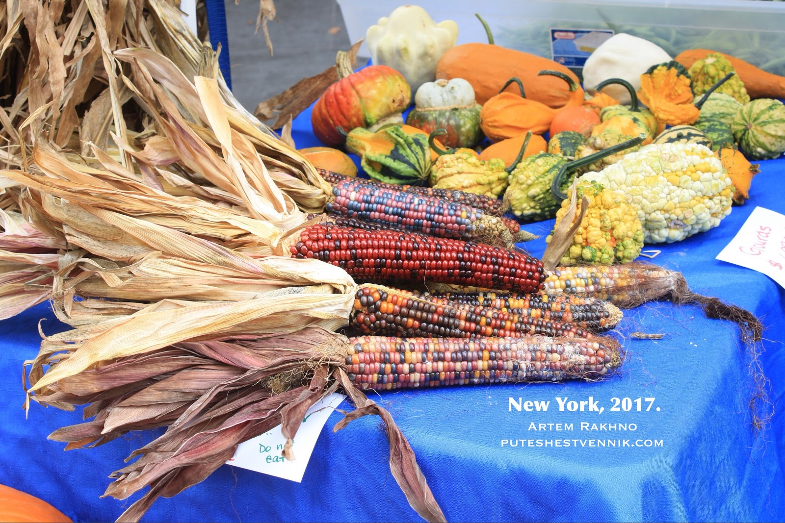 Разноцветная кукуруза на ярмарке в Бруклине