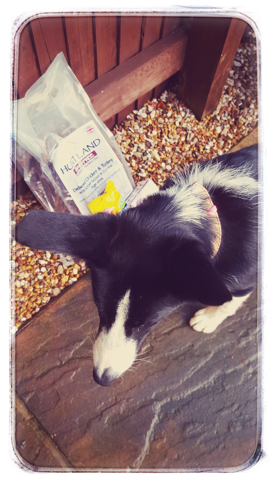 Puppy Food Review For Mollie
