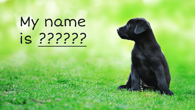 Choose the name of your dog