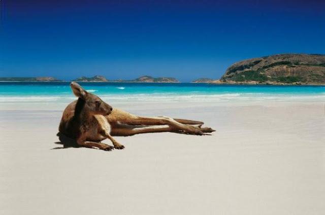أفضل المناطق السياحية في كانبيرا عاصمة أستراليا