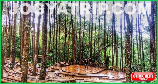 Jogja trip travel, Hutan Pinus Mangunan Jogyakarta, Harga tiket  masuk Pinus Mangunan, Jogja tour driver, Jogja tripadvisor