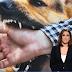 Σέρρες: Σε κατάσταση σοκ ο 9χρονος που του επιτέθηκαν σκυλιά (video)