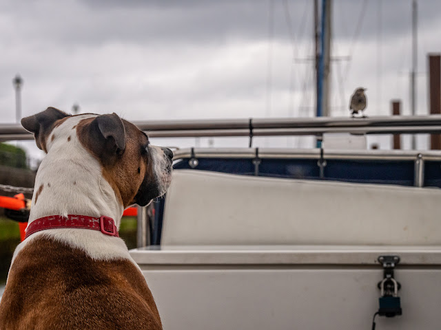 Photo of Ruby watching a rock pipit on Ravensdale's aft deck