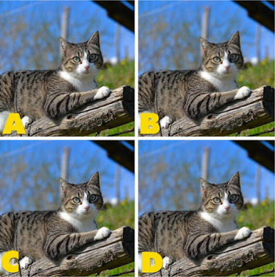 Which image is different? image 28