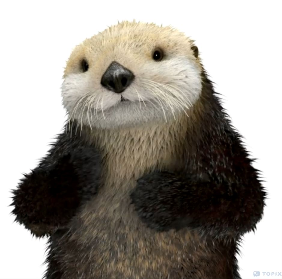 Tara Donovan Animator Topix Vfx First Telus Sea Otter Spot Is Up