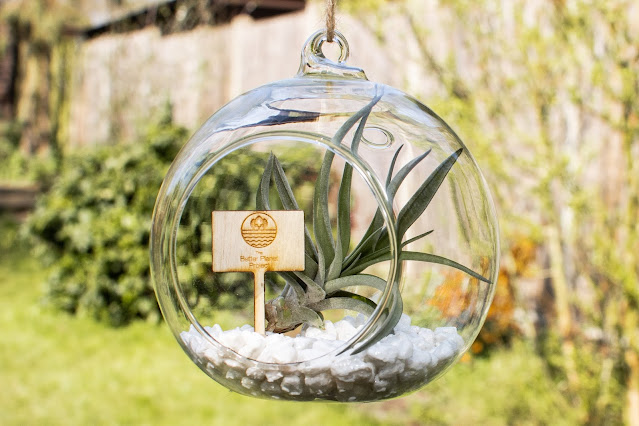 An air plant in a glass dome with a little wooden sign saying the Better Planet Project
