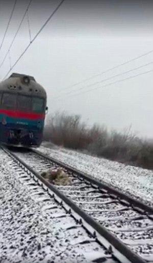 Perro protege a otro del tren en Ucrania