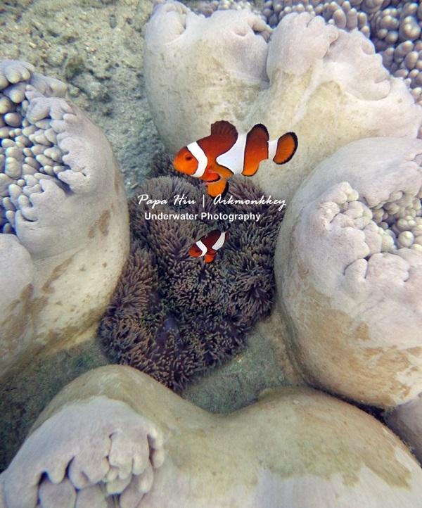 Tanjung Karang  Surga Penyelam  di Teluk Palu