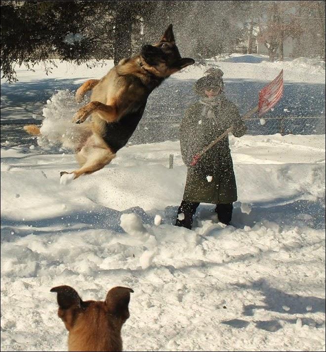 Foto de cachorra no gelo