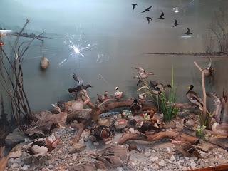 Kuş müzesi