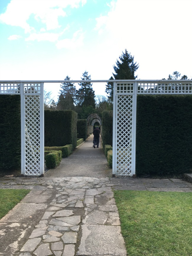 view through white painted wooden trellis of man pushing buggy and yew hedges and arches into the distance