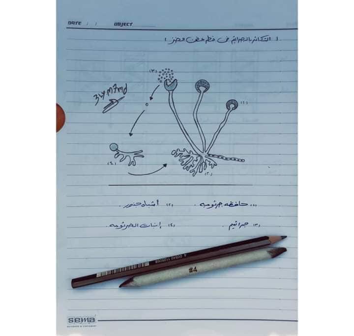 اهم رسومات منهج الاحياء للصف الثالث الثانوي بخط أ/ عماد بدوي 3