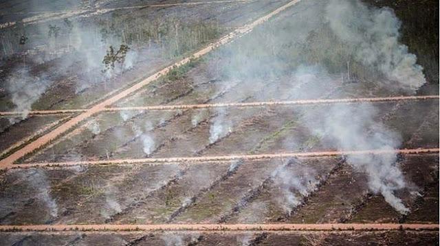 Walhi: Tak Masuk Akal! Hutan Adat Papua Dibakar dengan Ganti Rugi 100 Ribu Per Hektar
