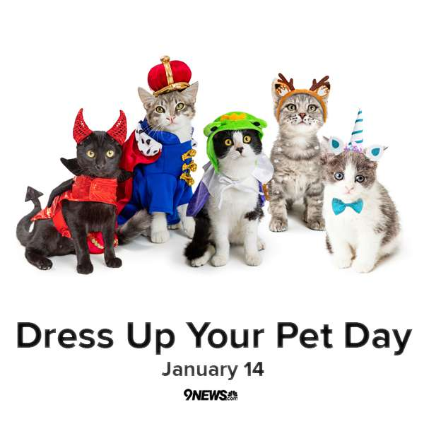 National Dress Up Your Pet Day Wishes Sweet Images