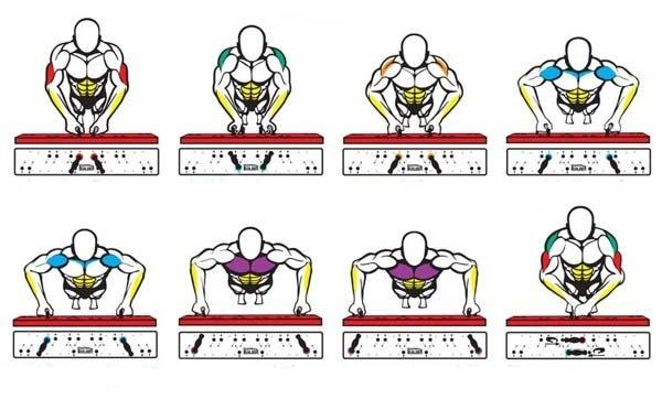العضلات المستهدفة في تمرين الضغط