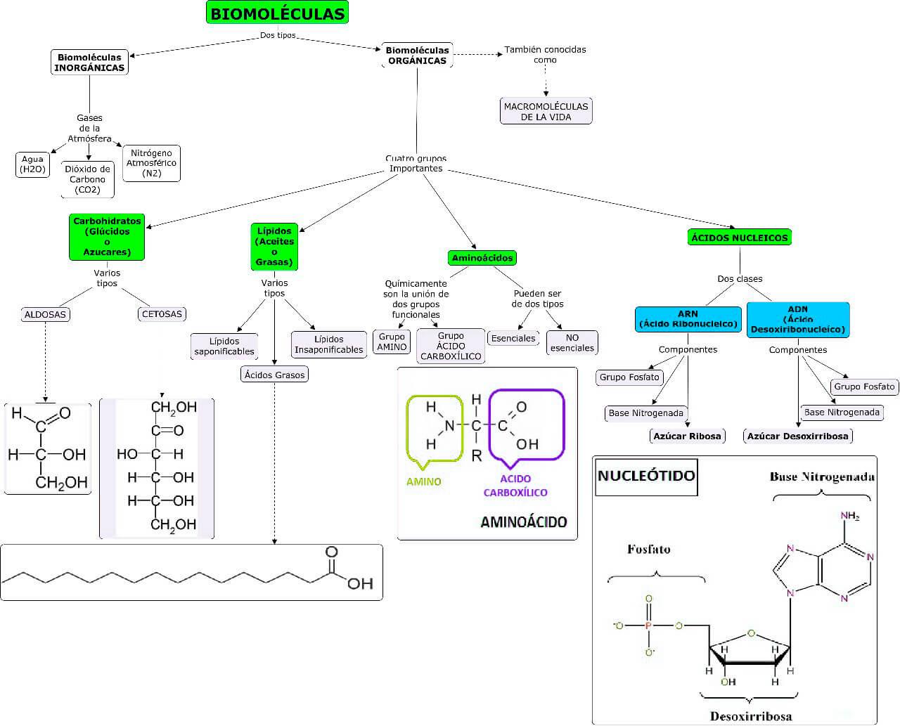 Mapa conceptual sobre Biomoléculas