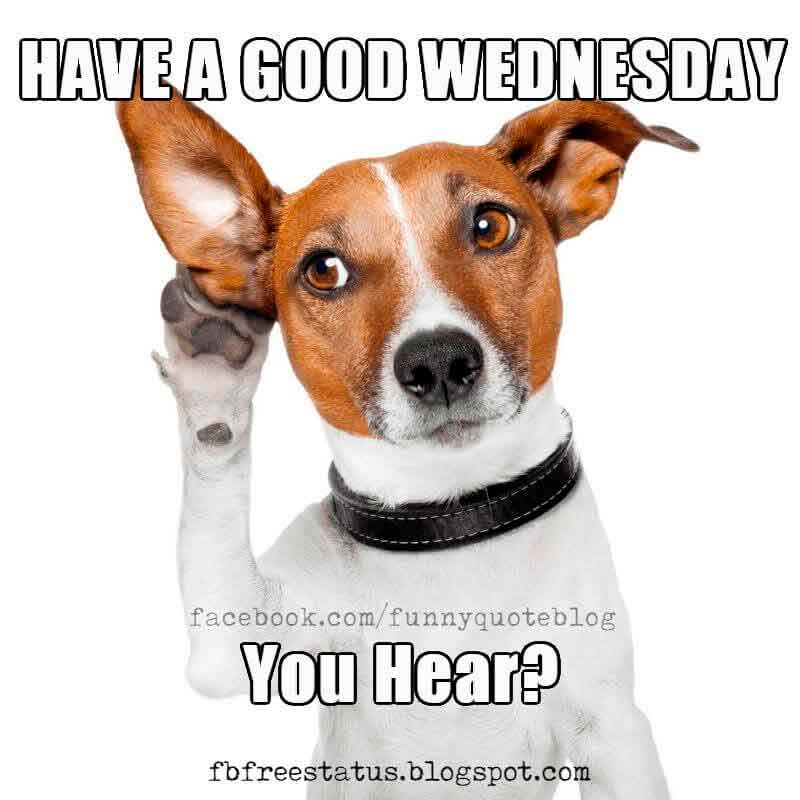It's Wednesday, Funny & Happy Wednesday Meme with ...