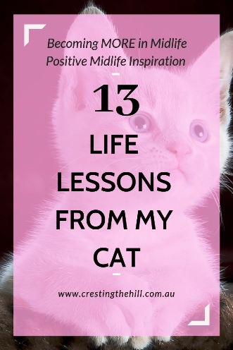 13 life lessons I've observed from owning a cat - from the silly to the profound #cat #lifelessons