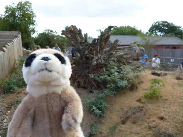 toy meerkat marwell zoo