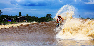 Surfing Bono In Sungai Kampar Riau Indonesia