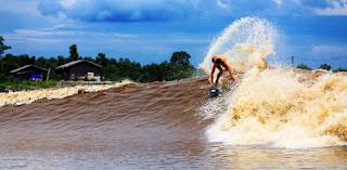 Surfing Bono In Sungai Kampar Riau Indonesia