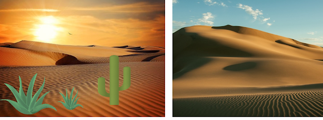 Desert and their Plants, xerophytic plants, cactus, opuntia, aloe Vera, desert habitat, terrestrial habitat, NCERT class 6th science, the living organisms and their surroundings