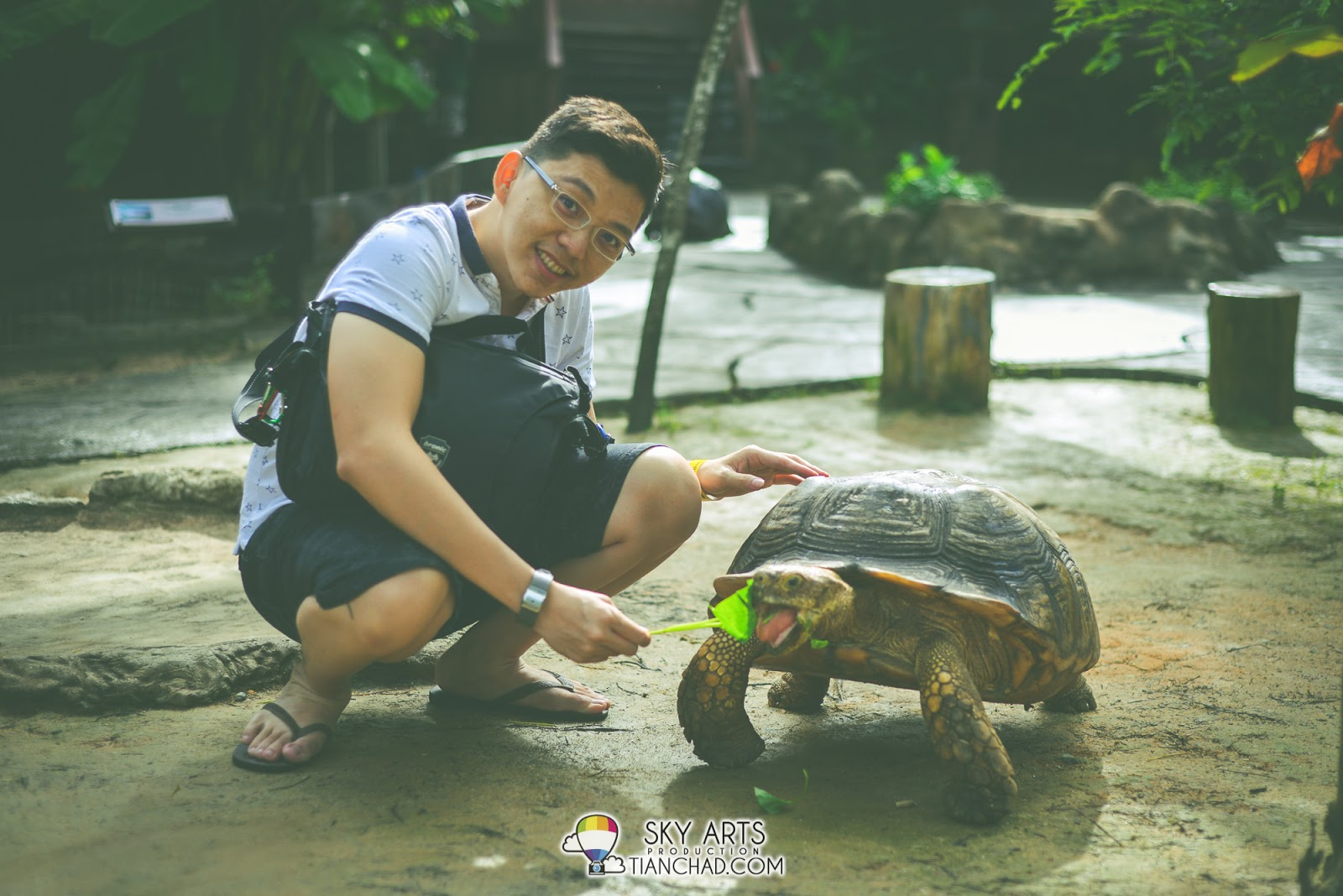 Some vegetables for this datuk tortoise