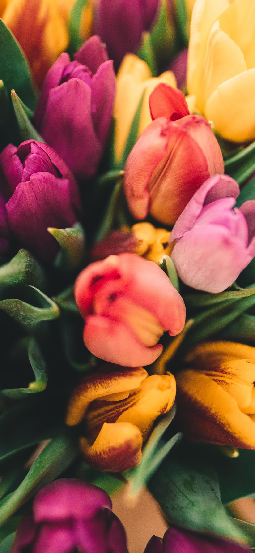 خلفية باقة أزهار منوعة
