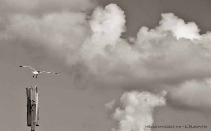 gull flying into clouds