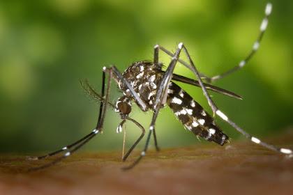Perbedaan Ciri-Ciri Demam Berdarah dan Demam Berdarah Dengue