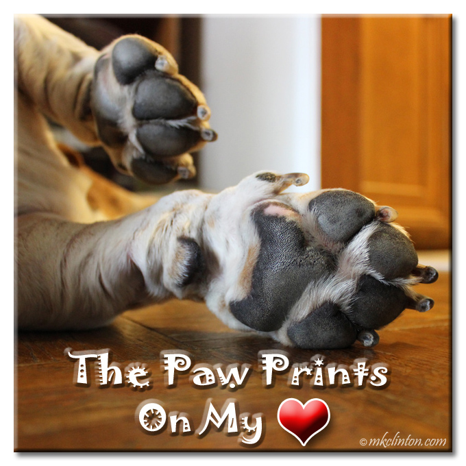 Meme of a Basset Hound's paws The paw prints on my heart