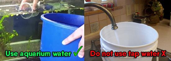 Fill bucket with aquarium water