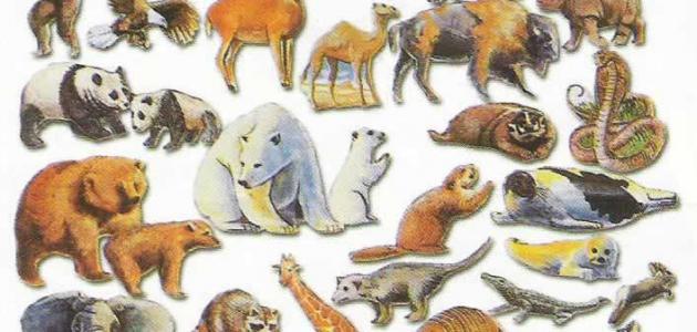 أهمية الحيوانات
