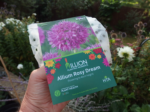 Deciding where to plant my new packet of bulbs