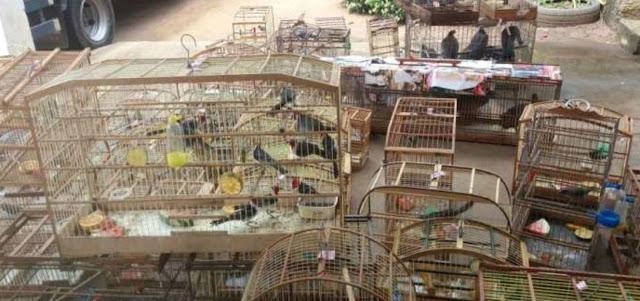 Mais de 550 animais silvestres são resgatados durante operação da PRF na Bahia
