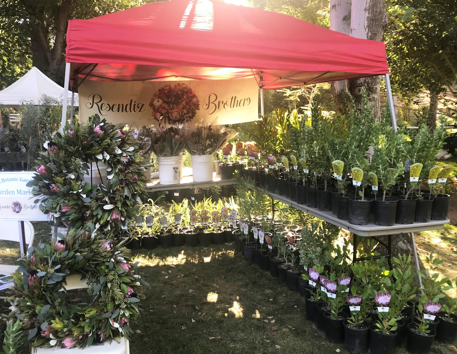 A Passion For Flowers Ucr Botanic Gardens Fall Market Plant Sale