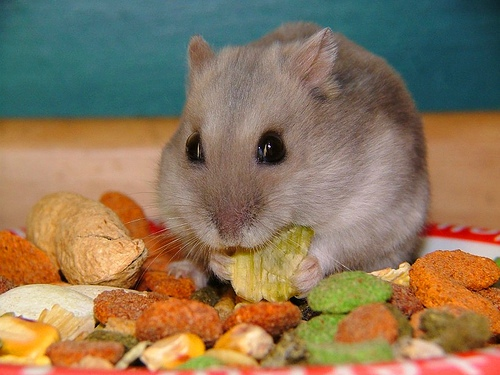 http://1.bp.blogspot.com/-_hJES1CAH18/UKYShIcVB-I/AAAAAAAAAnU/6Iyh_nyydkc/s400/hamster-food.jpg