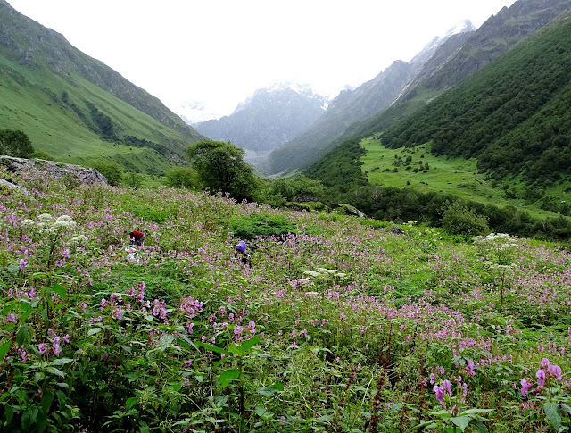 valley of flowers images  how to reach valley of flowers  valley of flowers opening dates 2019  valley of flowers trek 2019  valley of flowers opening dates 2020  valley of flowers kashmir  valley of flowers trek map  valley of flowers movie