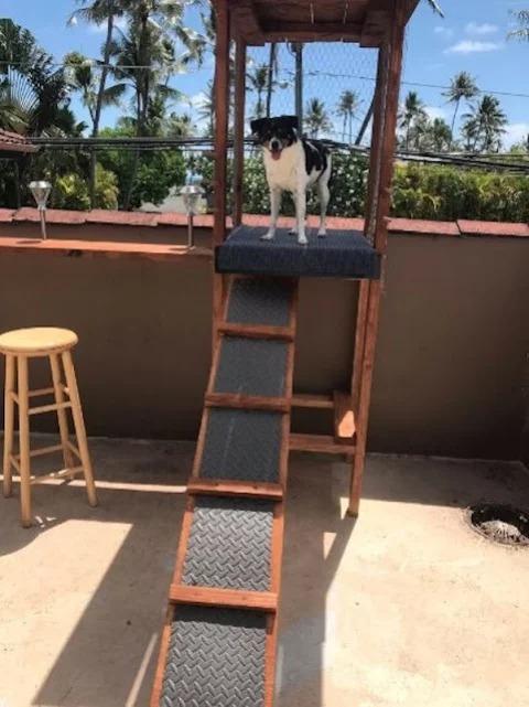 Familia le construye una caseta de vigilancia a su perrito metiche para que no se aburra