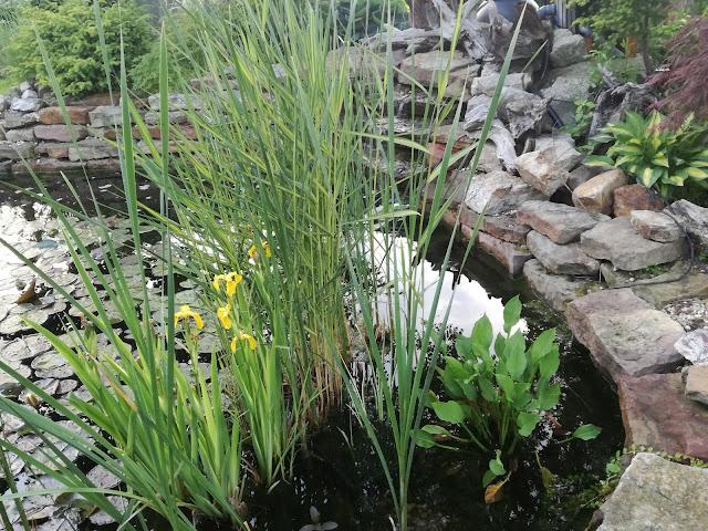 oczko wodne , staw ogrodowy