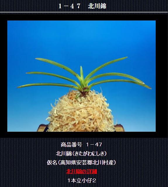 http://www.fuuran.jp/1-47.html
