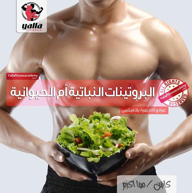 عكس ما تتوقع ! أيهما أفضل البروتينات النباتية أو الحيوانية !؟