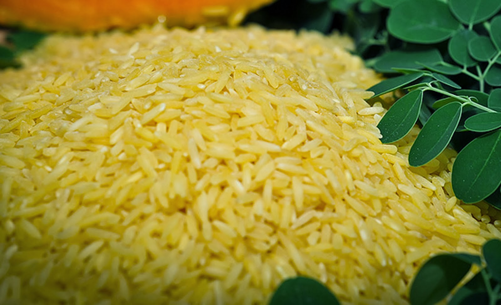 Genetically modified 'Golden Rice' coming in 2016 - HD Photos