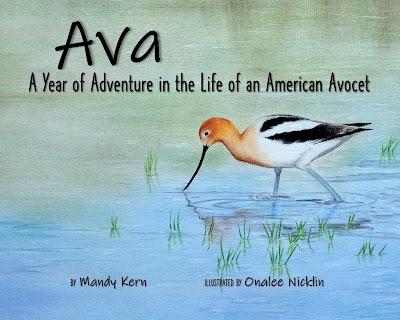 American Avocet in water