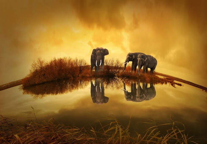 3-grey-elephants-under-yellow-sky